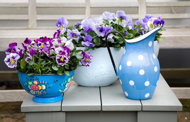 Kwiaty w domu - miski, durszklaki