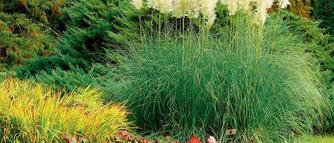 Zobacz jak przeprowadzić pielęgnację ogrodu przed zimą