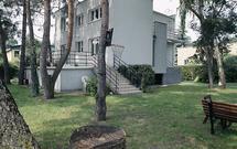 Zmiany w opłatach za wycięcie drzew: procedura uzyskania zezwolenia i kary za nielegalną wycinkę drzewa lub krzewu