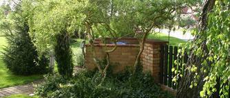 Wierzba mandżurska: sadzenie, uprawa, cięcie. Ciekawostka dendrologiczna uprawiana w ogrodzie