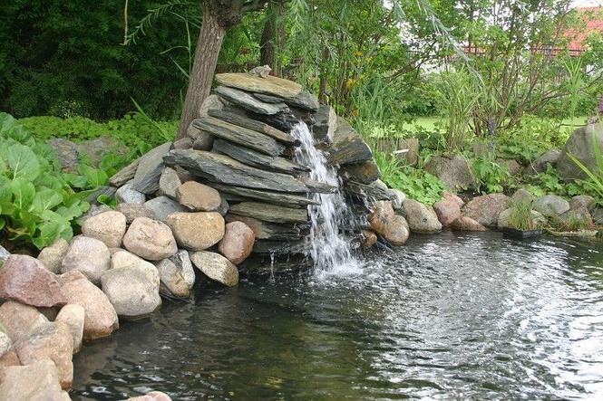 Woda w ogrodzie: oczko wodne, staw, źródełko