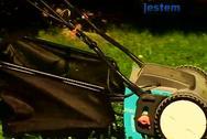 Pielęgnacja trawy. Jak uratować zaniedbany trawnik?